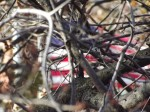 Photo of a US flag flying, seen through tree branches