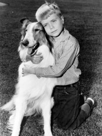 Timmy hugs his collie Lassie.