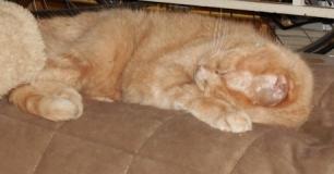 Gigi likes to sleep with her head tucked under herself.