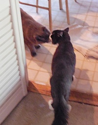 Romeo and Shadow get acquainted by touching noses.