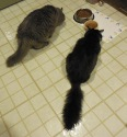 Romeo and Shadow enjoy the first of their evening meals.