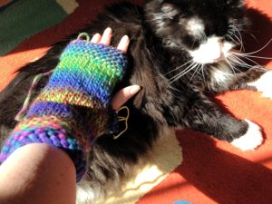 Romeo doesn't care for his namesake mitts.
